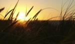 Sunset V / Gnaraloo, WA