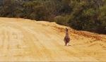 Highway patrol / Kalbarri Nationalpark, WA