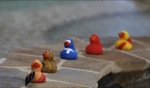 Rubber Duckies / Necker Island, BVI
