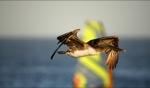 Pelican / Punta San Carlos, Baja