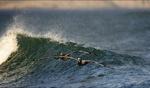 Pelicans / Punta San Carlos, Baja
