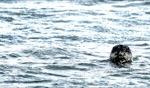 Friendly face / Seal, Punta San Carlos