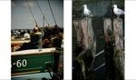 Setting Sail / Le Vivier sur Mer
