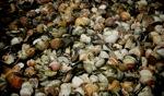 Shells / Le Vievier sur Mer