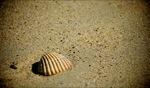 Shell / Beach, Bretagne