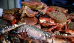 Seafood / Cancale