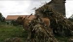 Ochsenkarren / Irgendwo in Galicien