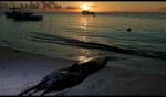 Marlin / Le Morne, Mauritius