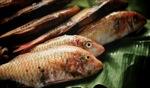 Fresh Fish / Mauritius