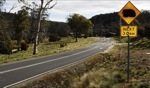 Wombat crossing / Cradle Mountain, Tasmania