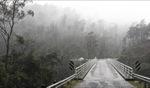 Rain... / Mole Creek, Tasmania
