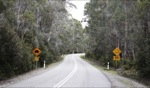 Long winding road.. / Lake St Clair, Tasmania