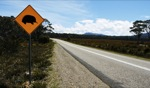 Echidna Crossing / Somewhere, Tasmania