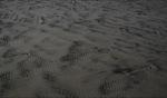 Sand / Ocean Beach, Tasmania