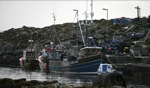 Lobster Boats / Tiree, Schottland