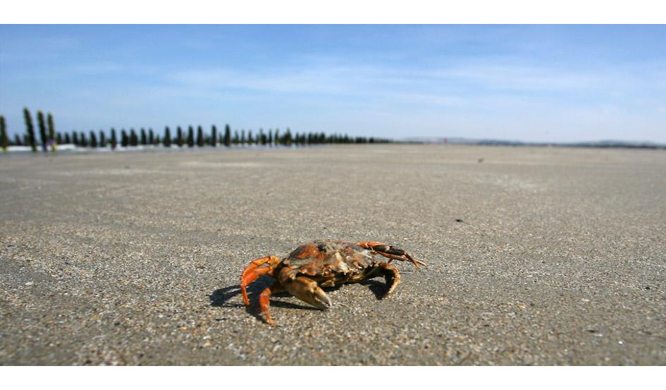 Crab / Wissant, Pas de Calais