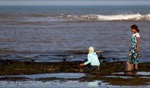 Harvesting seaweed / Moulay