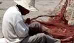Netting / Essaouira