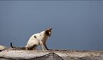 Cat / Essaouira