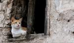 On the watch… / Essaouira