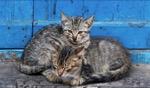 Cats / Essaouira