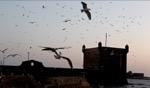 The wind cries Mary… / Essaouira