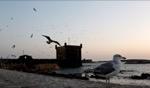 Birds… / Essaouira